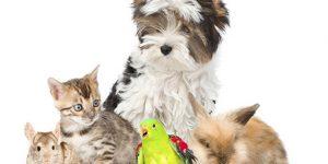 Gyvūnų prekių parduotuvė internetu