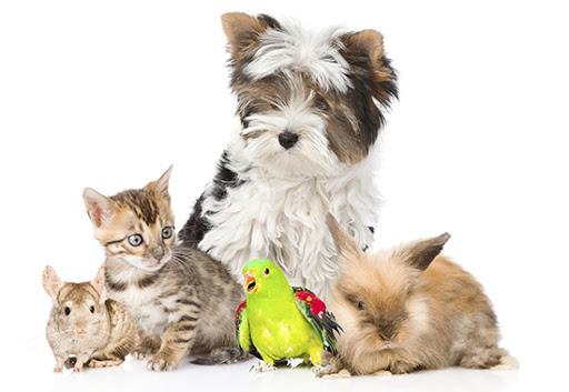 Higienos prekės gyvūnams
